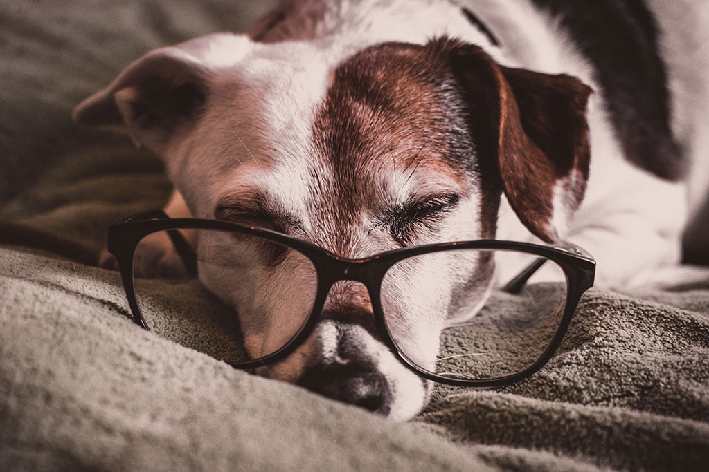 Tips for Caring for Your Senior Dog