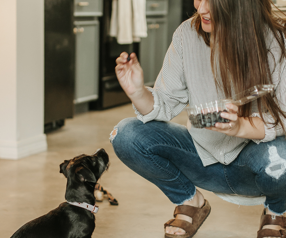 natural dog treats, healthy dog treats, foods safe for dogs